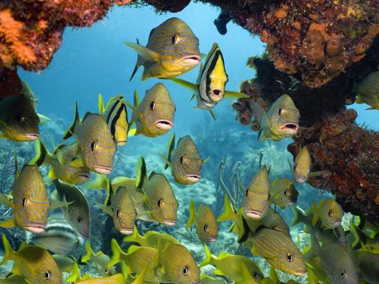ماهی های زیبا