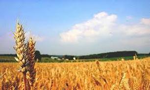 "بهرهوری کلید طلایی بخش ""کشاورزی"""