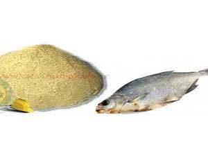 طرح اشتغالزایی تولید پودر ماهی