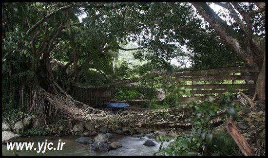 پل طبیعی