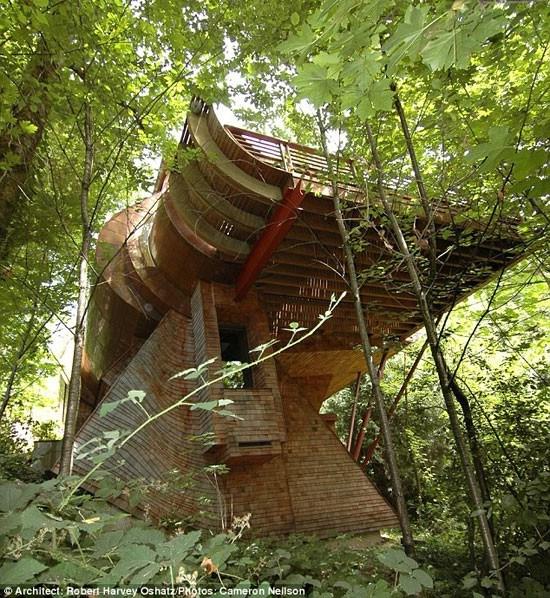 مدرنترین خانه درختی + عکسمثلاً سقف چوبی طبیعی با الوارهای لمینیت از میان یک دیوار شیشه ای بزرگ می  گذرند که این دیوار شیشه ای به دور اتاق نشیمن کشیده شده است.
