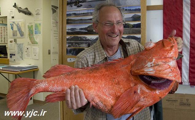 صید ماهی 200ساله +عکس