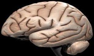 خوردن روی سبب جوانه زنی مغز میشود!
