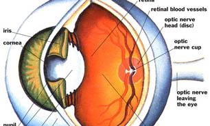 هزینه عمل شبکیه چشم
