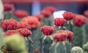 افتتاح چهارمین مرکز آموزش و مشاوره گل و گیاه در منطقه ۱۰