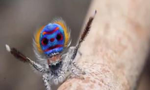 عنکبوت عجیب الخلقه