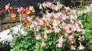 باغ گیاهان دارویی میزبان شهروندان غرب پایتخت