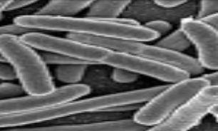 درمان ویروس ناشناخته با آلیاژی از مس
