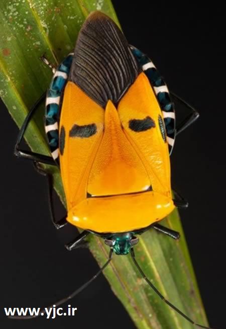 حشرات شگفت انگیز شبیه انسان
