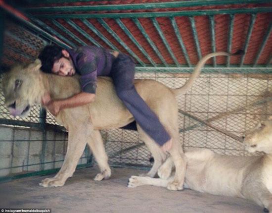 1765278 569 - شیوه جدید خوشگذرانی شیوخ عرب حاشیه خلیج فارس/ گوشت کوسه غذای شیر و ببر خانگی + تصاویر