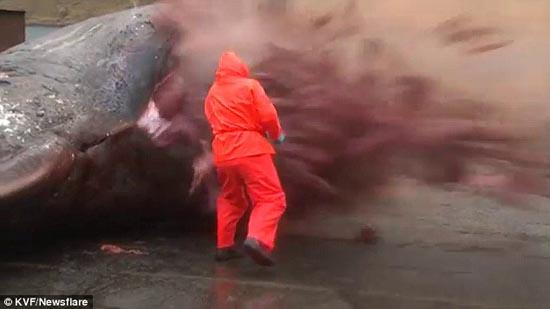 تصاویری از انفجار شدید یک نهنگ