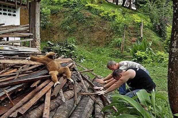 2897412 911 نشستن حیوانات به سبک انسانها / تصاویر