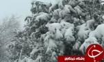 تعطیلی مدارس آذربایجان شرقی