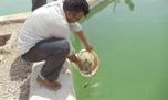 400 قطعه بچه فیل ماهی در رفسنجان در حال پرورش