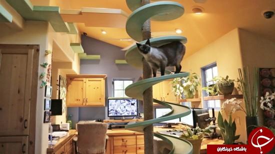 خانه ای که بهشت گربه هاست +عکس
