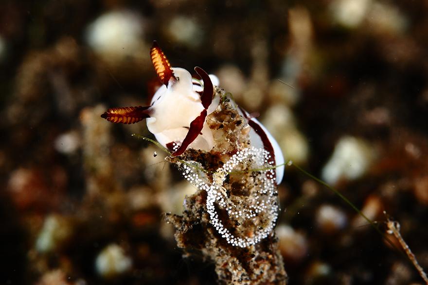 دیدنیها از اعماق دریا+ تصاویر