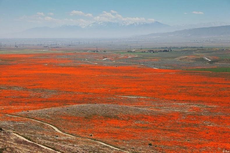 دره شکوفه های زرد + تصاویر