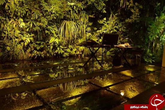 حیاط این خانه یک جنگل واقعی است +عکس