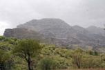 سایه خشکسالی بر جنگلهای زاگرس