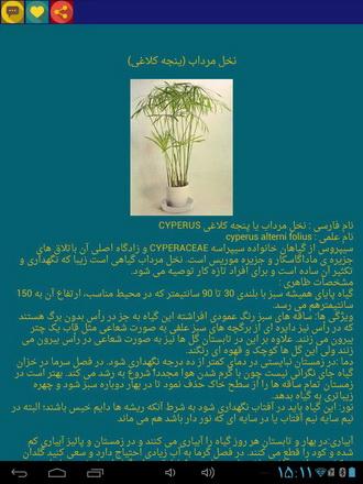 دانلود کنید: آشنایی با گیاهان آپارتمانی