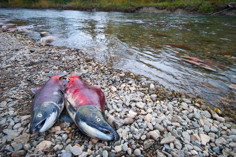 Image result for ماهی در رودخانه
