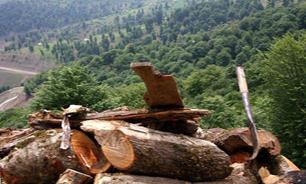 تحقیق و تفحص از سازمان جنگلها و منابعطبیعی ادامه دارد/به زودی گزارش اولیه را منتشر میکنیم