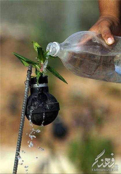 عکس خلاقیت زن فلسطینی خلاقیت اخبار جالب ابتکار