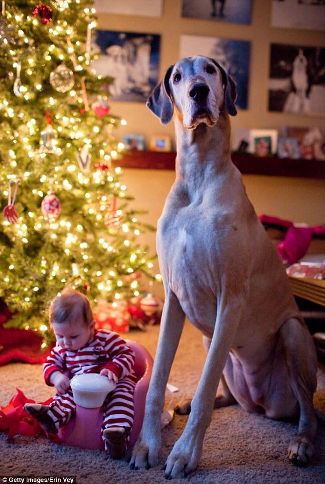 قیمت سگ عکس جالب دختر و سگ اخبار جالب