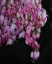 پیشبینی کاشت ۱۰۰۰ هکتار گل محمدی و زعفران در باغات کرمان