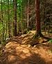 جنگلهای زاگرس نیاز به پژوهشکده دارد.