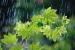 بارش  باران و افت محسوس  دما  در استان