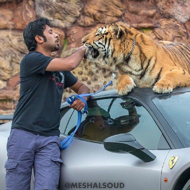 ابرخودروها و ابر گربههای شیخ عرب + تصاویر