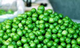 فروش 45 میلیارد تومانی  گوجه سبز در مازندران