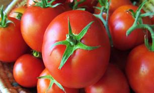 محموله تریاک به تهران رسید/ کشف 60 کیلو مواد از میان گوجهفرنگیها