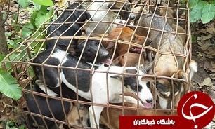 سر و صدای سگها در مبادلات تجاری/ رونق تجارت حیوانات خانگی یا آمارهای ساختگی