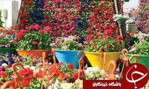 گل هم کالای لوکس شد/کاهش صادرات گل و گیاه در برابر افزایش واردات