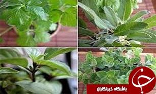 بهره برداران غیرمجاز تیشه به ریشه گیاهان خوراکی طبیعت ایلام زدند