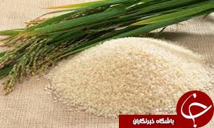 پیشرفت فیزیکی برنج کاری درشهرستان بابل