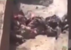 دانلود فیلم زنده زنده سوختن تروریست های داعشی