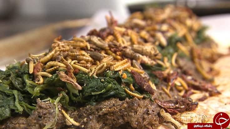 همبرگرحشرات زنده، پرفروش ترین غذای 2015+ عکس
