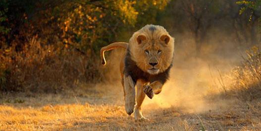 سریعترین جانوران جهان را بشناسید+تصاویر!