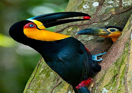 تصاویر زیبا از پرندگان و فرزندانشان + تصاویر