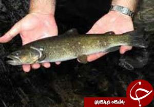 قابلیت تولید 70% آبزی آرتمیا در کرمان