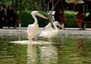 افتتاح باغ پرندگان در دهه فجر