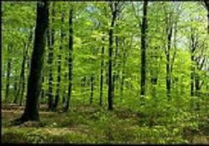 افزایش فضای سبز کرمانشاه با جنگل کاری