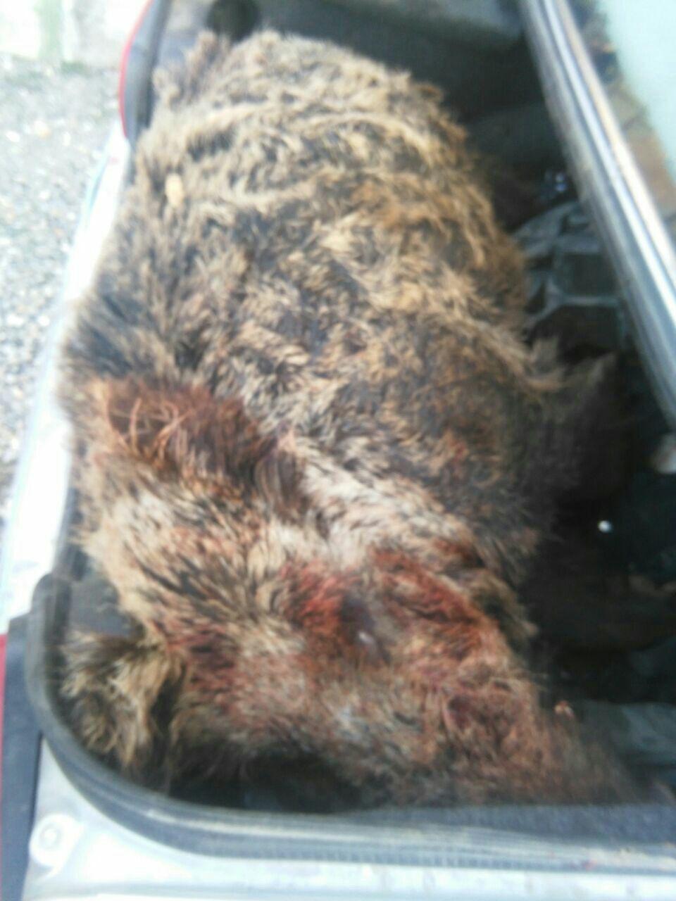 شکارچیان غیرمجاز این بار در دام پلیس گرفتار شدند+تصویر