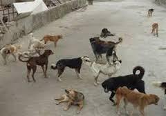 تغییر رویه و توقف اتلاف سگ های ولگرد در خوزستان