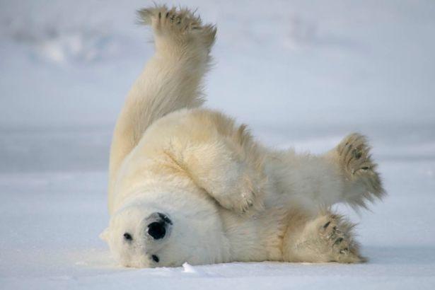 8 تصویر جالب و خندهدار از حیوانات دوستداشتنی