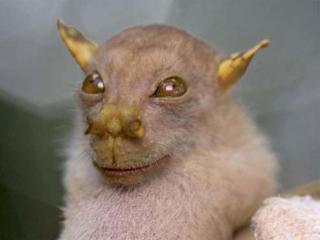 حیوانات عجیب و ترسناک و محل زندگی آنها (1)
