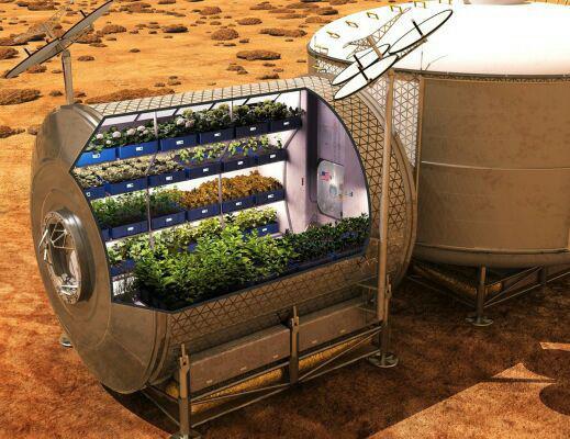 پرورش سیب زمینی در مریخ!
